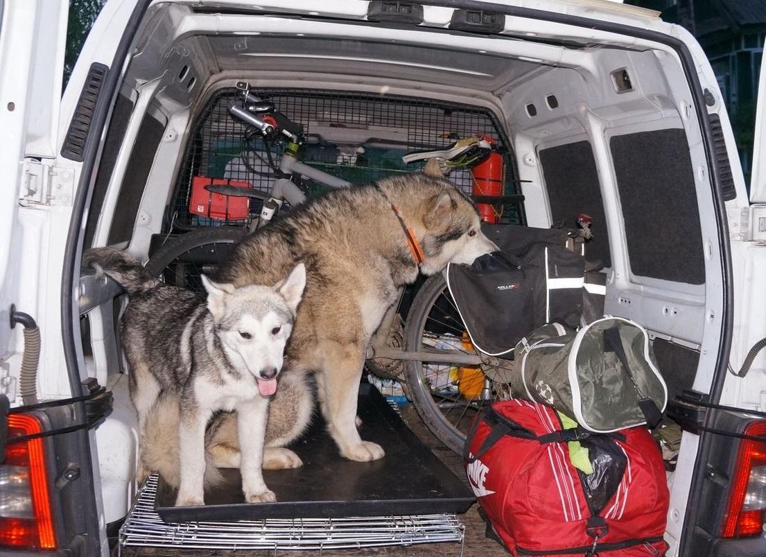 Перевозка животных на международные выставки с хозяевами